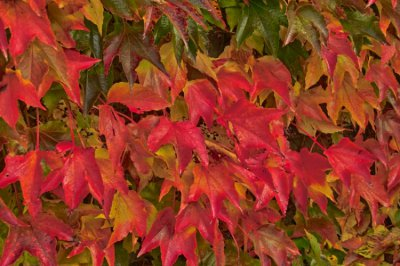red leaves_01.jpg